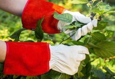 10 Essential Gardening Tools That Make Gardening Easy. Gear Up!
